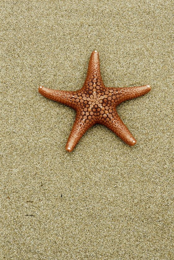 WINNER PRIMARY SCHOOLS: Here is a beautiful star fish, it looks like he has little spots for the particles but he doesn't it's just how it looks. (Asuka Hopwood)