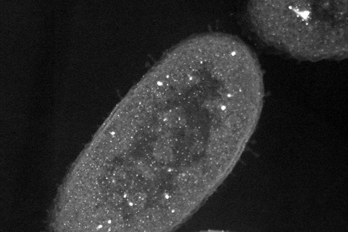 Zombie bacteria