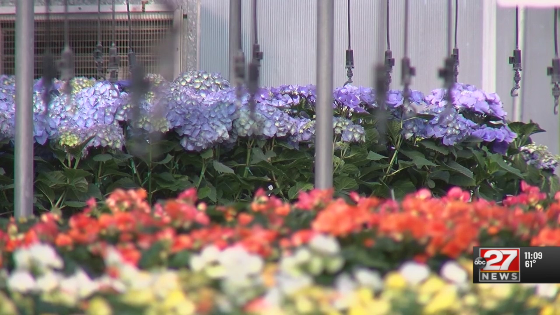 Musselman Greenhouses struggling amid pandemic