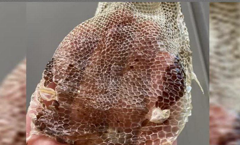 forgotten friend reptile sanctuary snakeskin