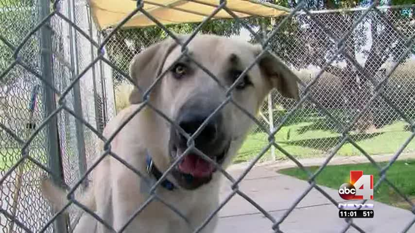 Bill to Ban Gas Chamber Euthanasia Moves to Senate_22038177