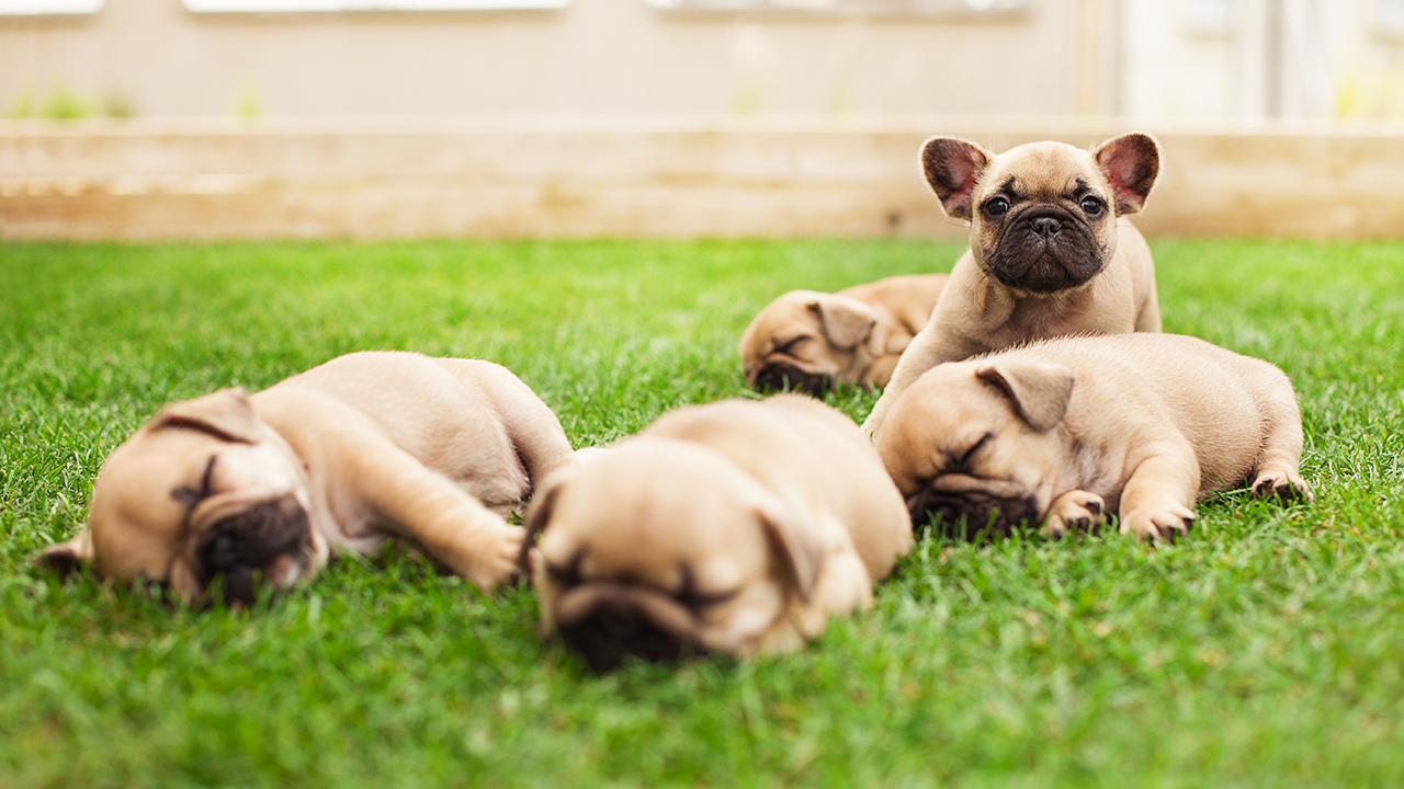 puppies-dogs-pet_1517871886633_339880_ver1_20180206193903-159532