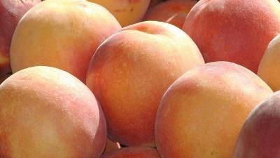 Metabolism---Fruits-and-Veggies-jpg_20150921151004-159532