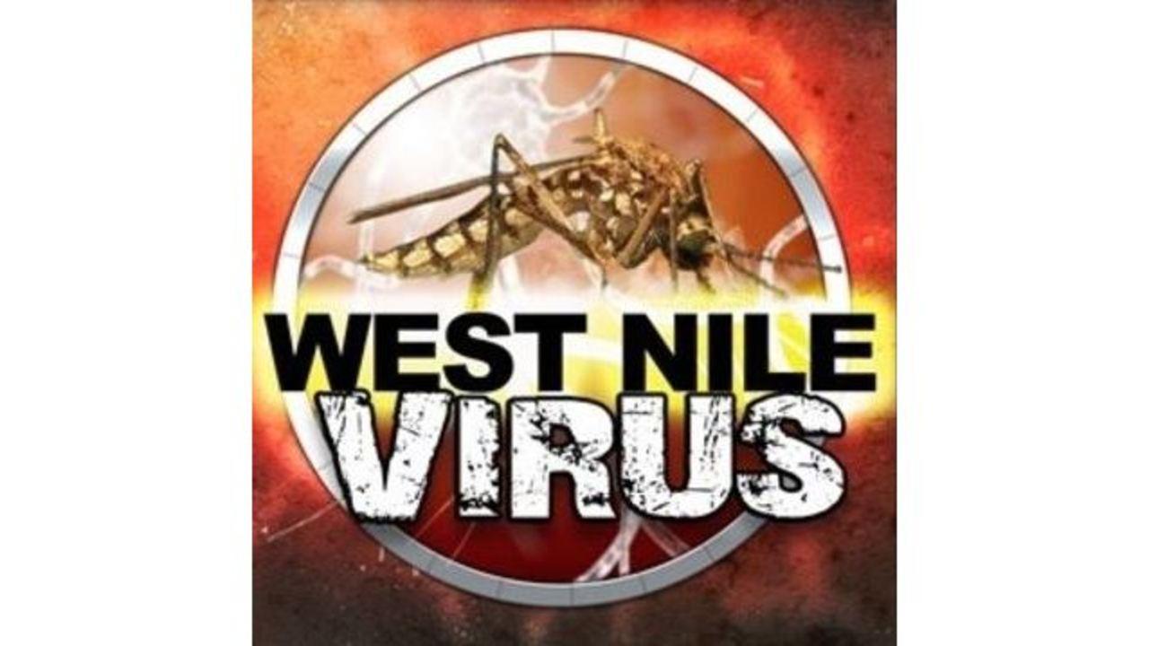 west nile_1534877817201.JPG.jpg