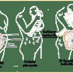 Imunoglobina especifica anti rh