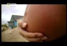 No ventre materno 9 de 11 - 7º mês