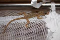 he's in my mosquito net
