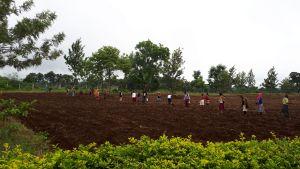 Secondary Planting