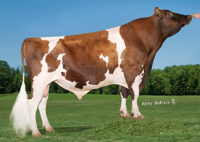 138HO04895 Rocher Canvas KRAFTY Red VG-85 = Canvas RF x Persia Kream Red GP x Duster Kylee VG-87 x Benchmark Karalee VG-88 x Enhancer Kamie EX-90 US: 6276 1960 CH: US 000.62761960.9 aAa: 165 Born / Geb. / Né / Nacido: 25/06/2006 N°1 bull alive in Milk in the USA and Switzerland! Kappa-casein: AB Good for making cheese Beta-casein: A2 / A2 Highly digestible milk! Great Semen Fertility Easy calving: + 7 (USA)