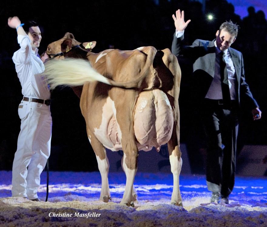 IRENE RED: First Red Holstein EX-96 cow in Switzerland Suard JORDAN IRENE RED EX-96 (EX-97 Udder) 9 y. On June 3rd 2013, IRENE RED received the highest classification to date for a Red Holstein cow in Switzerland: EX-96 Format EX-95, Rump EX-95, Feet & Legs EX-96 and Udder EX-97