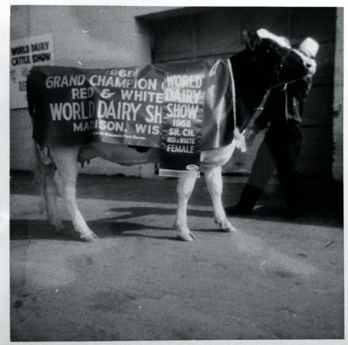 1968: Grand Champion Red & White This was the second World Dairy Show in Madison, now known as the World Dairy Expo Photo credit: Jean-Louis Schrago