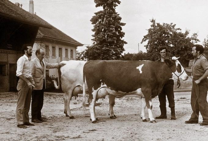 1977: Larry Moore's first visit to Switzerland Cow: Schrago Jack Helvetia Red, first milking daughter of L.M. Jack Red in Switzerland. Picture: Larry Moore with J-L Schrago, André & Aloys Schrago