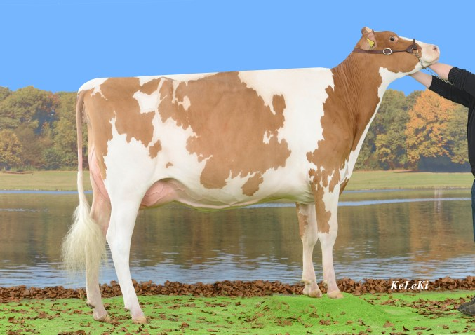 Redspy Vincent Vanilee Red VG-85 2 years                                                            Vanilee Red  = Vincent  Red  EX-94   x  Jet                                              Owner / Besitzer / Propriétaire / Proprietario: Mathurin Spycher, Sonvilier, Jura, Switzerland