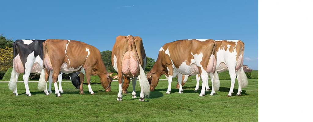 RED HOLSTEIN AND RED FACTOR BULLS<br/>(bulls classified by: Net Merit in dollars = NM$)
