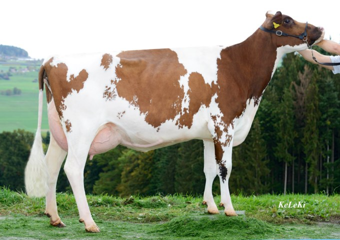 TDG Seven Basilea Red VG-85 2 y. Mother of the bull: TDG Delect Basist Red