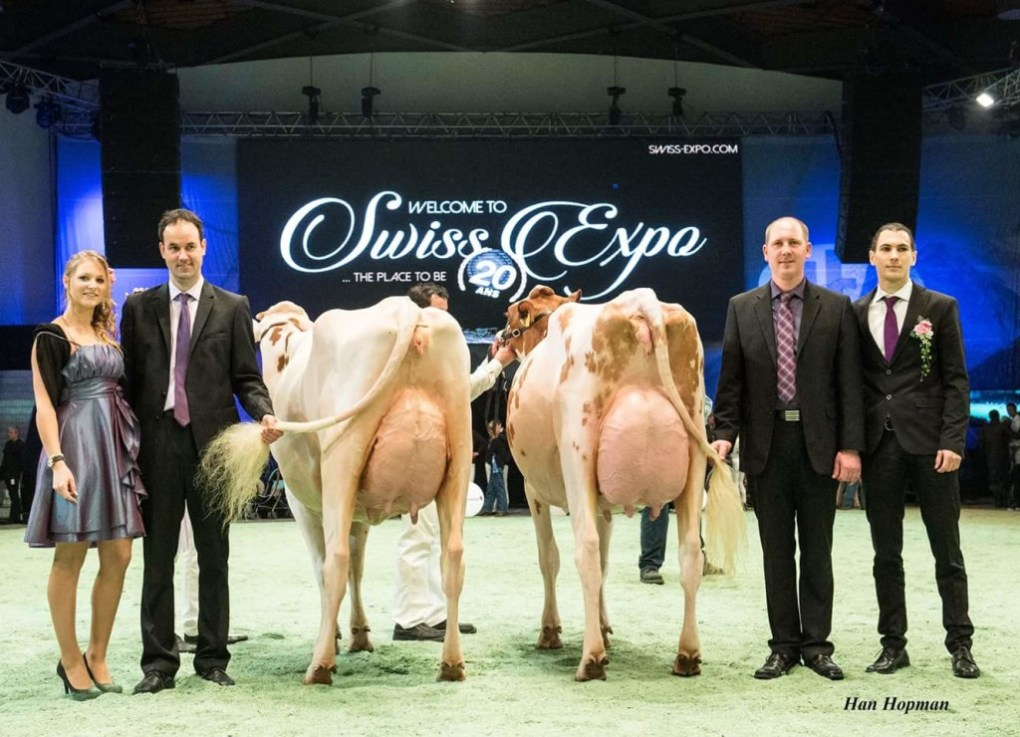 Kolly-JI VINCENT Coucoula VG-86  2y. (right side) Owner / Besitzer / Propriétaire / Propietario: Kolly Lionel, Pont-la-Ville, FR, Switzerland Champion Junior (RH) + Reserve Udder Champion (Swiss Expo 2016)