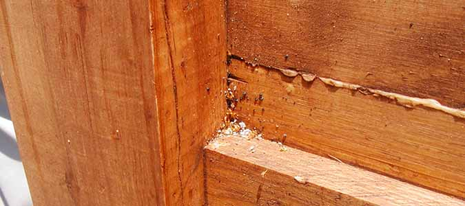 What do Bats have to do with Bed Bugs?   ABC Blog