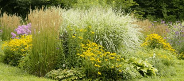 texas landscaping plants landscape