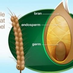 Grain Kernel Diagram 5 String Bass Fretboard W Is For Whole Grains A B C Vegan Wheat