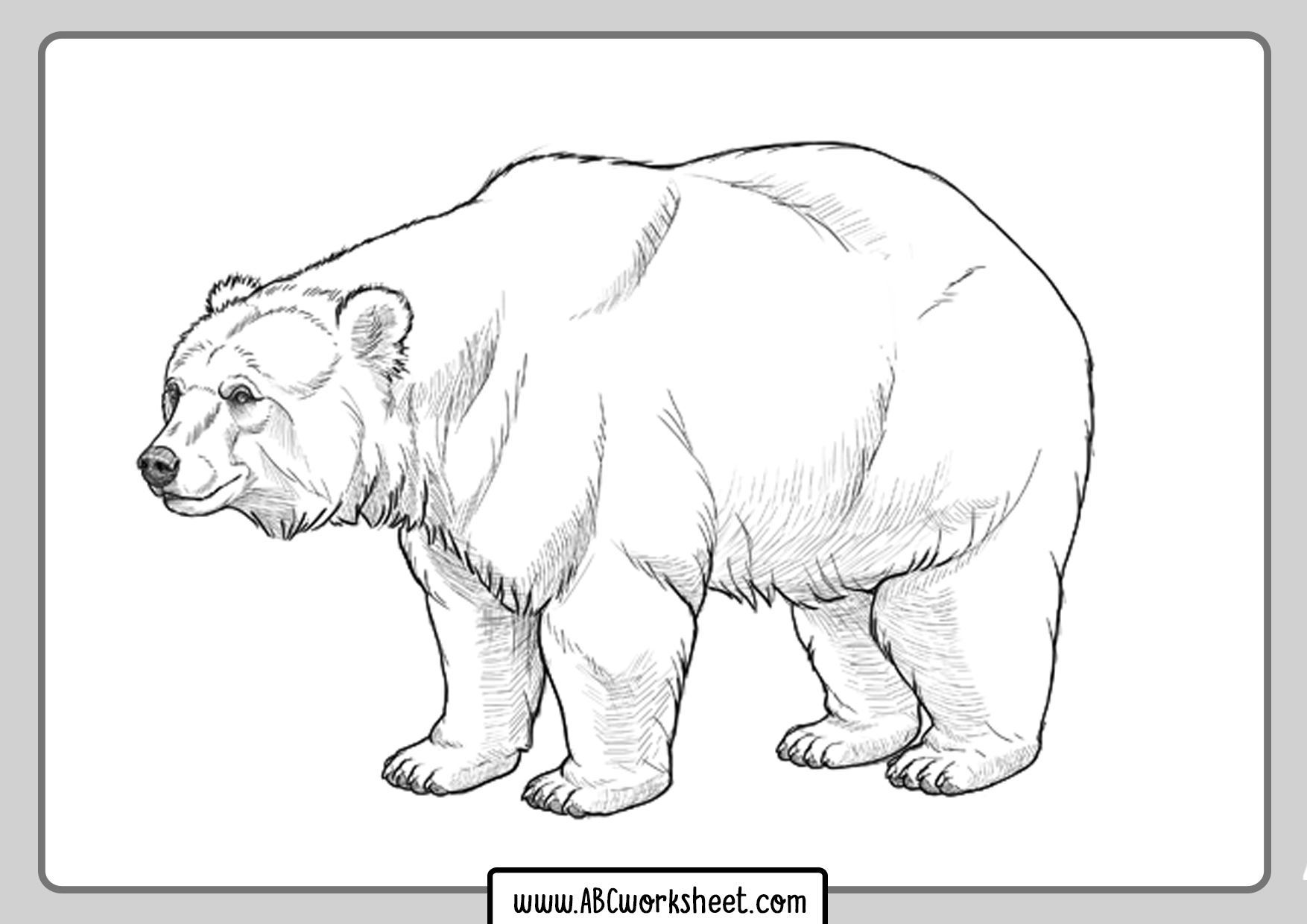 Coloring Grizzly Bear