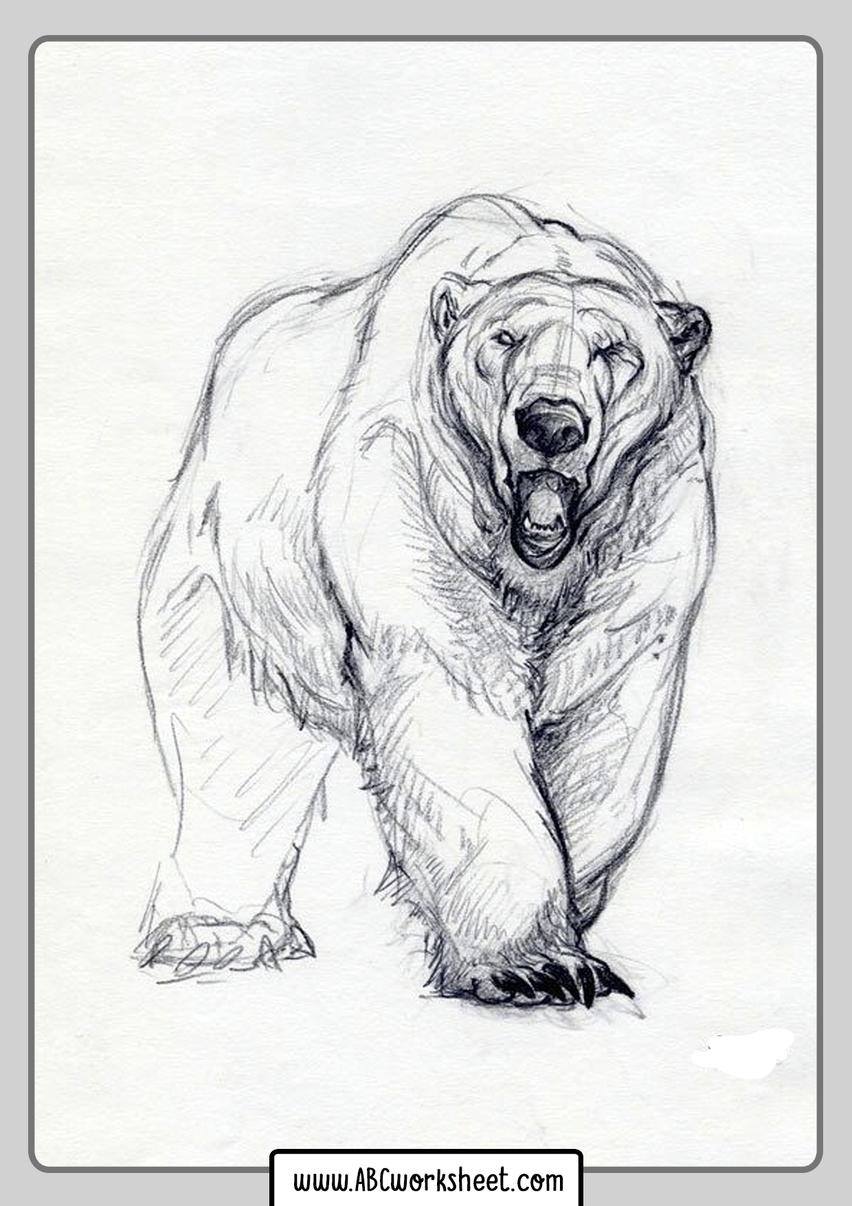 Coloring Pages Grizzly Bear