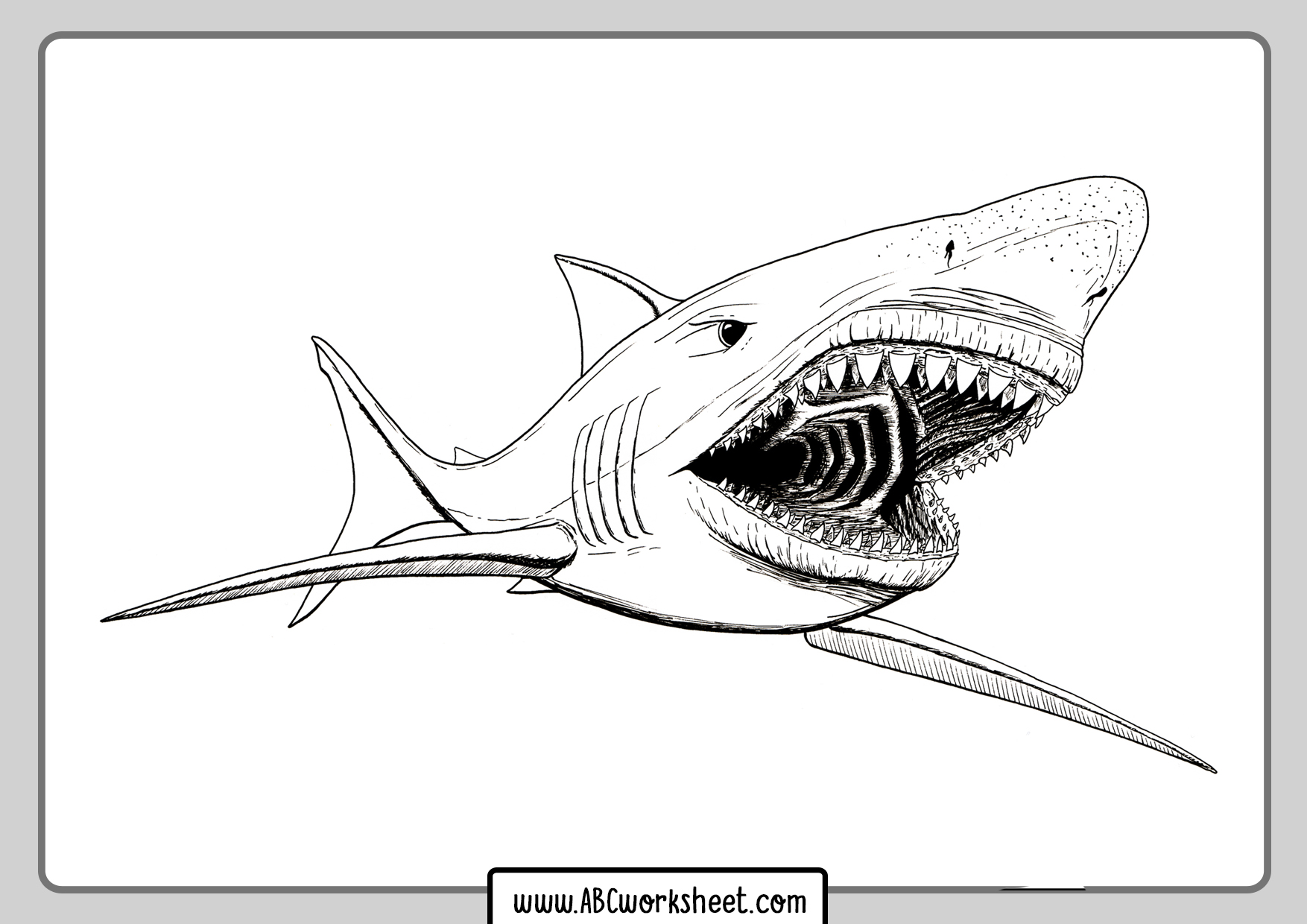 Shark Math Worksheets