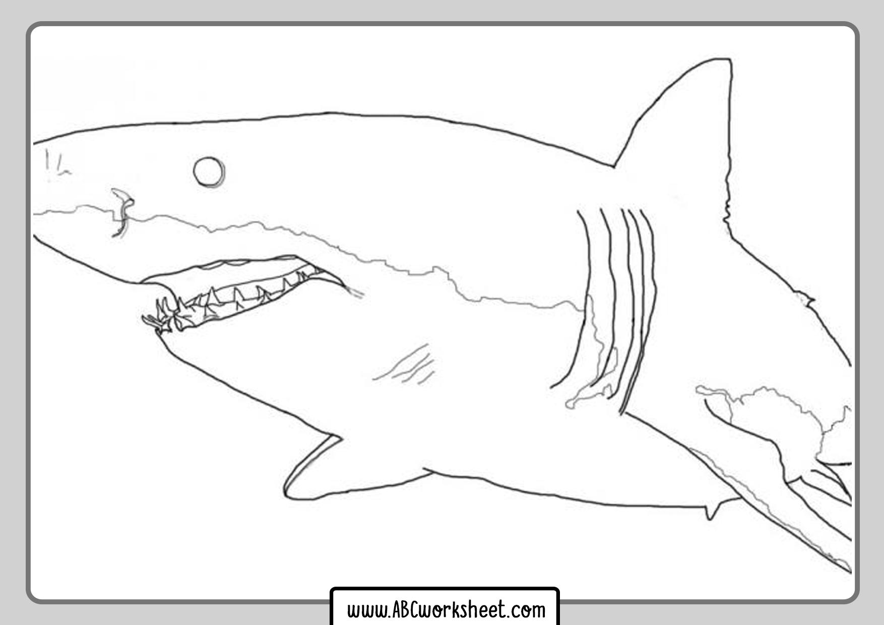 Shark Alphabet Worksheets