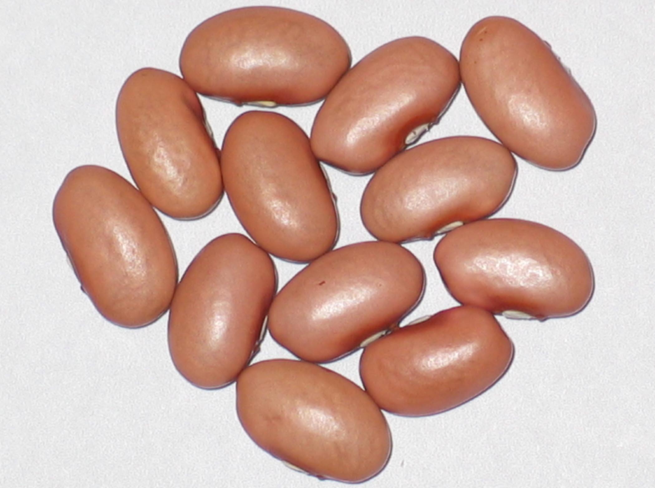 Beans For Bean Bag Chair