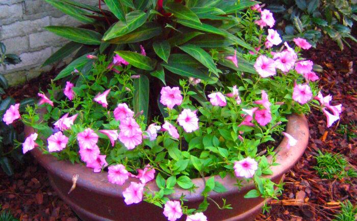 Plantings (28)