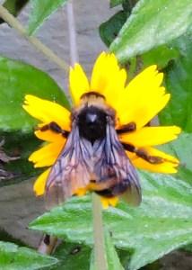 HoneybeeB