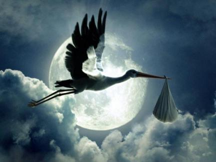 stork_baby_delivery_720x540