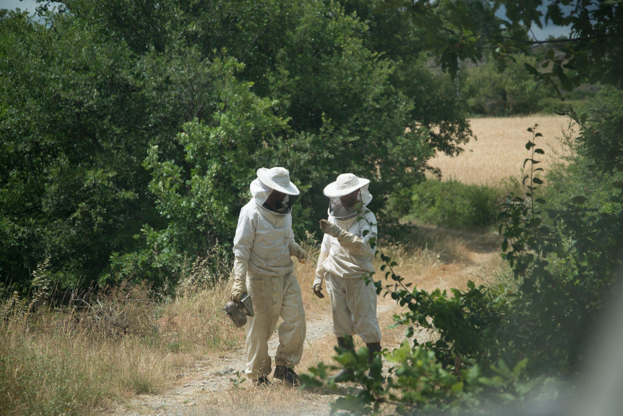 photo apiculteur apiculture
