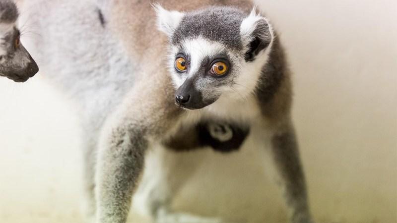 Katta-Kinder im Tierpark entdecken