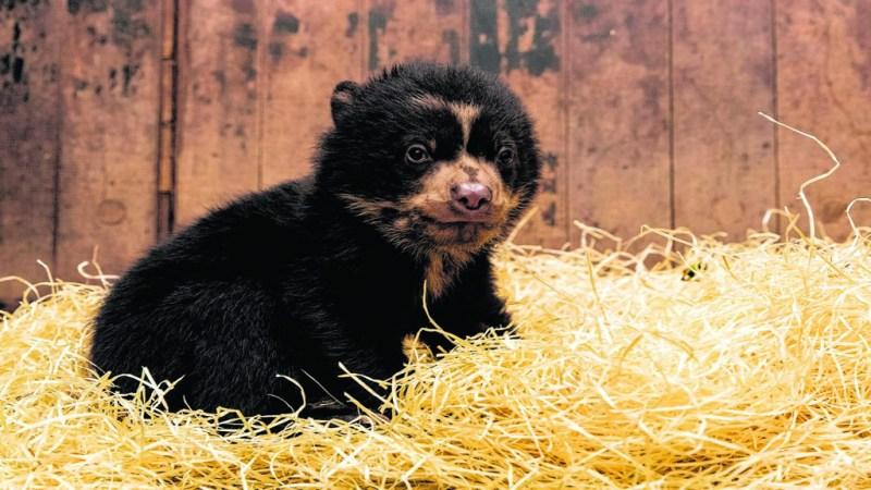 Bärennachwuchs im Tierpark