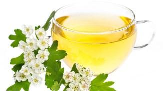 Tee aus Weißdornblüten ist schmackhaft