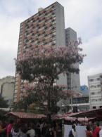 in Liberdade (Japanviertel)