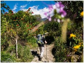 Durch ein Blumenmeer voll Weihnachtssterne geht es runter bis nach Kharikola auf 2200m.