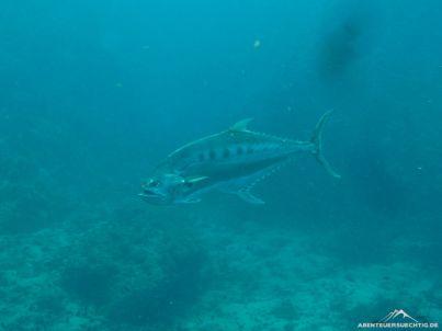 Auch größere Fische gab es zu sehen