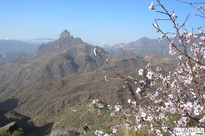 Blühende Bäume und Vulkanberglandschaften in Gran Canaria