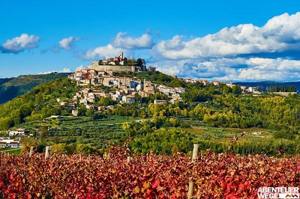 Herbstliche Weinberge am Fuße des Bergdorfes Motovun in Istrien