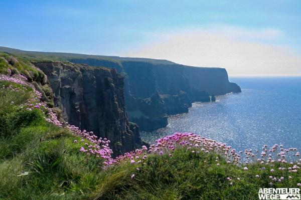 Spektakuläre Steilküste an den Cliffs of Moher