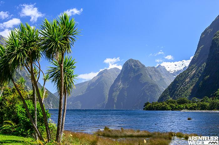 Der Milford Sound auf der Südinsel Neuseelands mit Palmen unter blauem Himmel