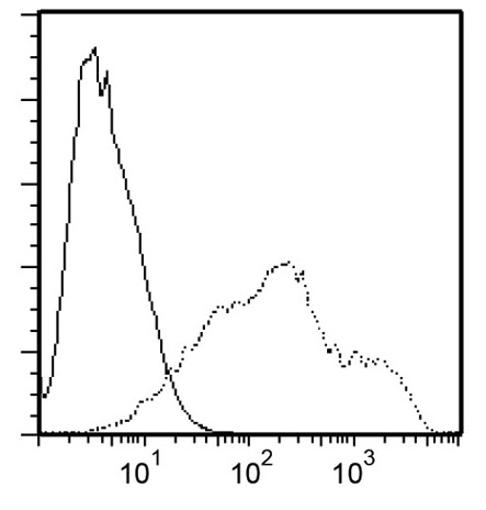 Monoclonal Antibody to Rat NKG2A/C/E Antibody (Clone