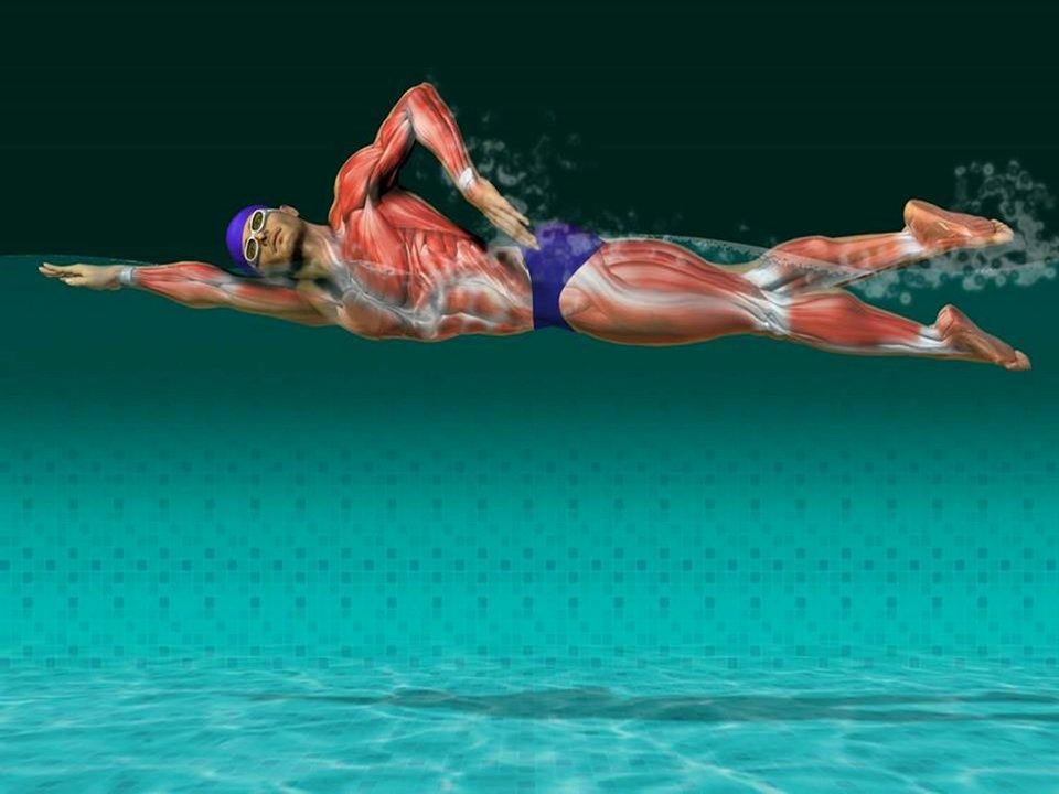 natação, musculos e massa com a moda praia masculina