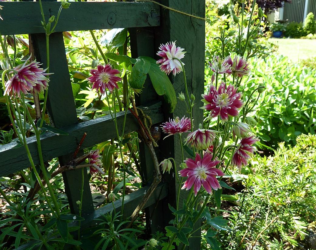 Back garden july 12th 7 aberdeen gardening - This