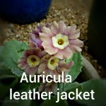 Auricula Leather jacket (5)