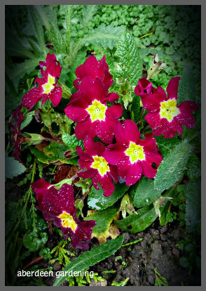 February in the garden 032