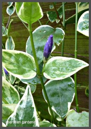 February in the garden 056