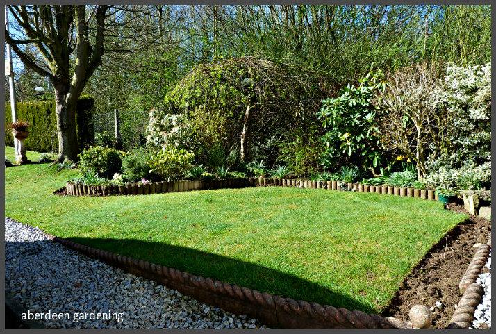 Front garden March (3)