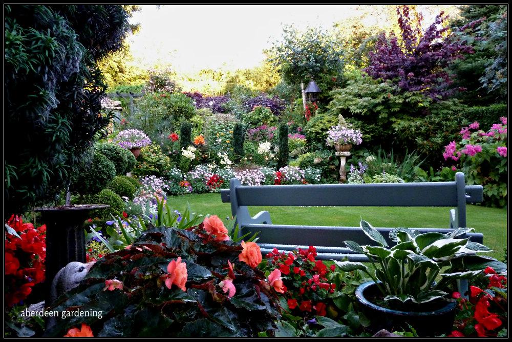 Back garden in August (2)
